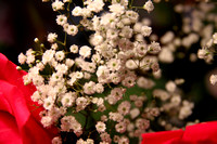 08F JRR Baby's Breath VA 140328-D